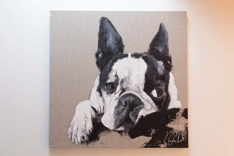 Boston Terrier / ボストンテリア