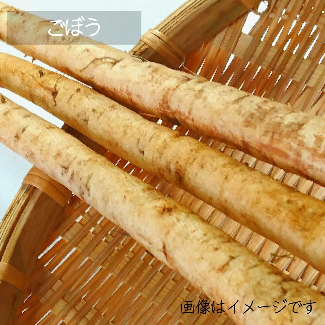 新鮮な夏野菜 : ゴボウ 1~3本 8月の朝採り直売野菜 8月31日発送予定