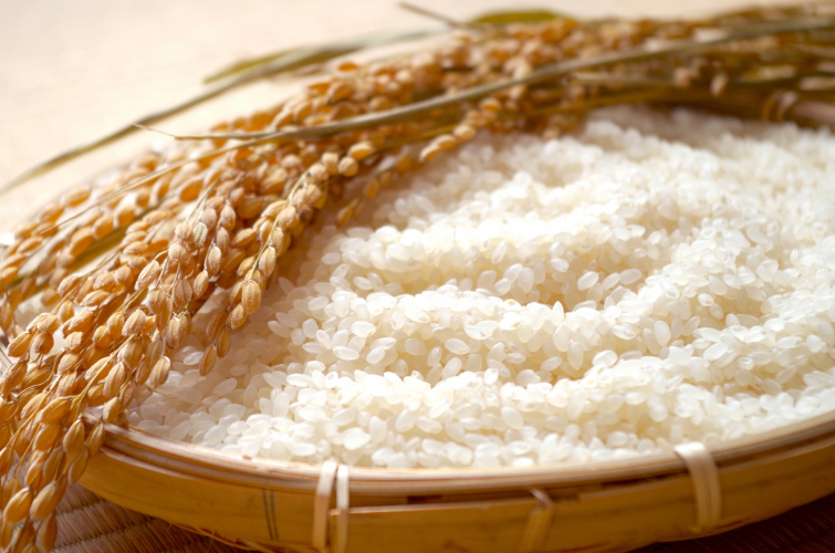【長野米】 新米食べ比べお試し3回コース