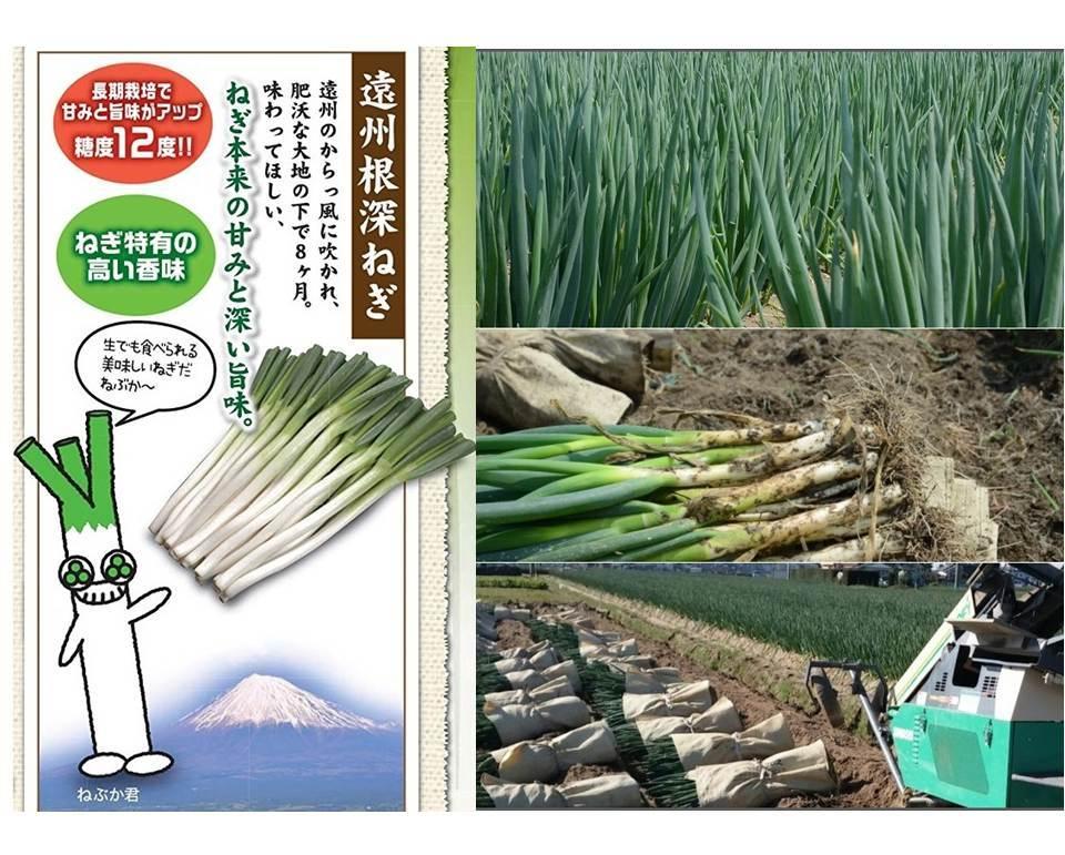 冷凍いわたねぎ巻き餃子(25g×8個) - 画像2