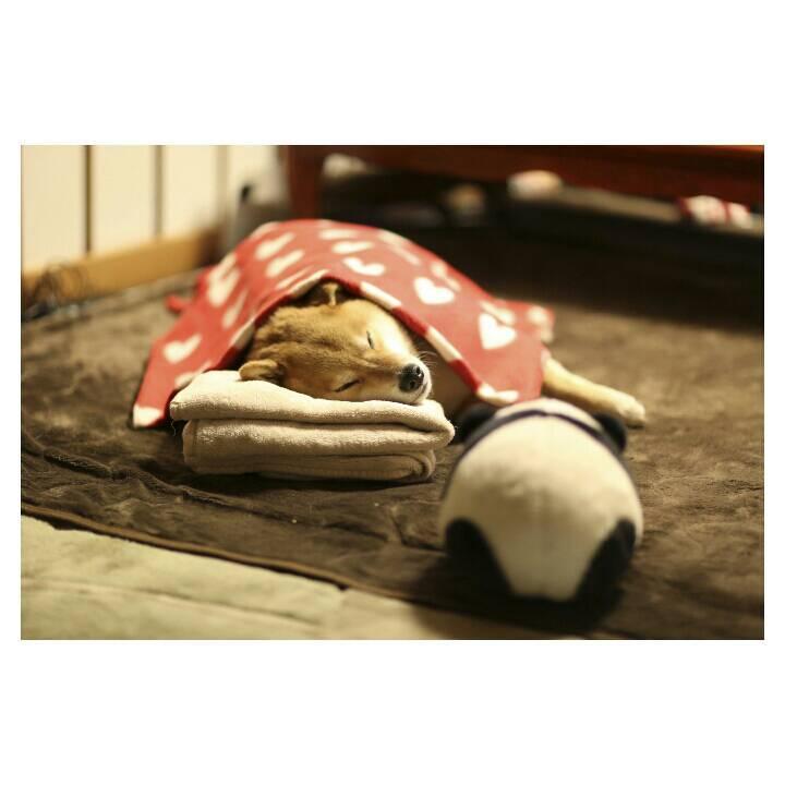 ポストカード ーパンダさんのぷりけつ越しのおやすみまるー