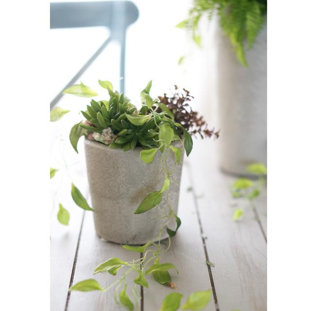 【アレンジ】  コンクリート風花器にグリーンの寄せ植えアレンジ(小)