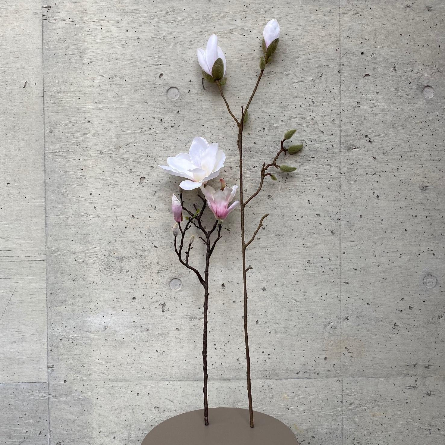 Magnolia モクレン(ホワイトピンク)