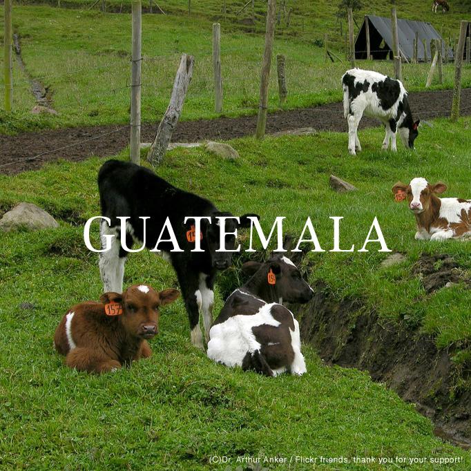 グアテマラ|200g