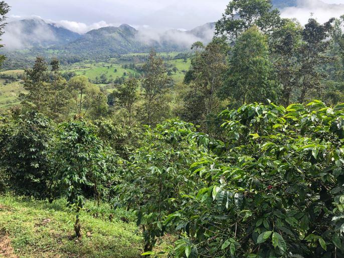 BRISA & TIERRA Panama Coffee紹介画像1