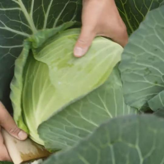 フードロスになる野菜や果物を使用。
