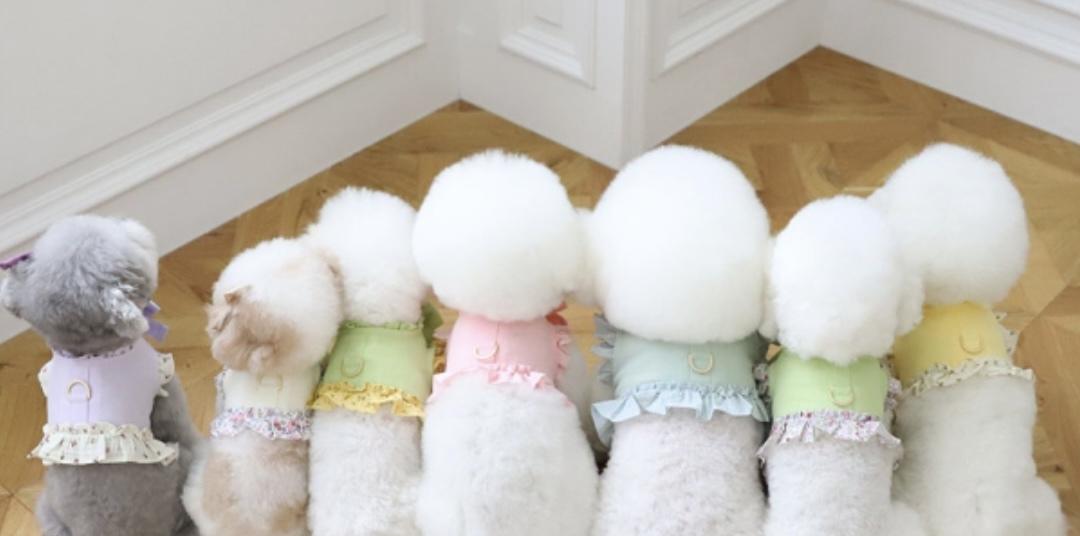 Dogwear BaeBae紹介画像1