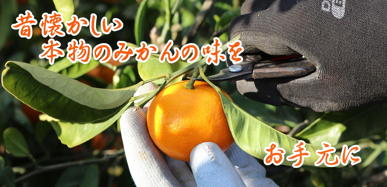他では食べれない珍しい「みかん」をお取り寄せ【柑橘専門店 小林果園】
