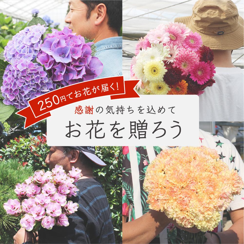 250円でお花が届く!<br/> ワンフラワー・プロジェクト