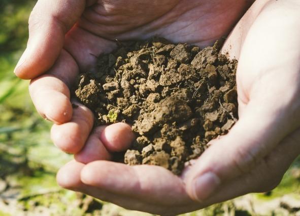 有機・無農薬・自然栽培の農産物をあなたへ