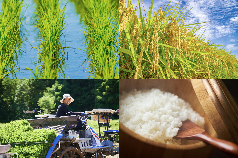 安心・安全のお米を皆様に食べていただく、それが私たちの望みです