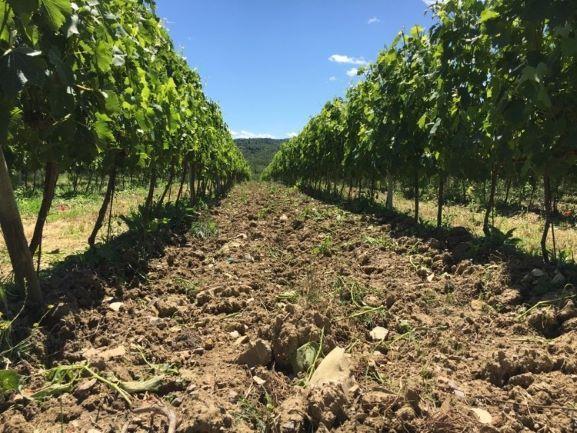 現地に足を運び、ワクワクするワインを見つける。