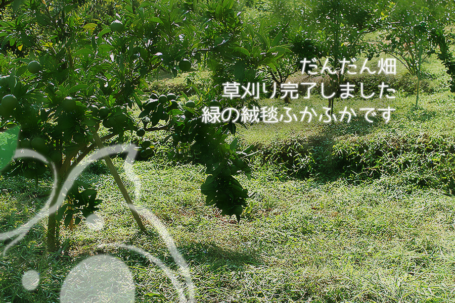 八つ葉農園