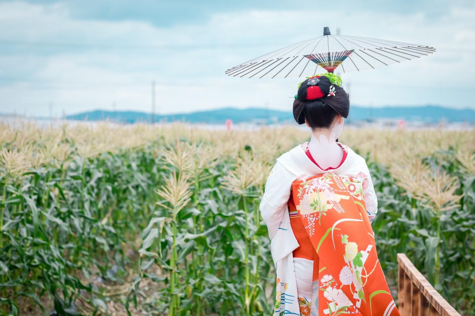 舞妓さんが収穫体験