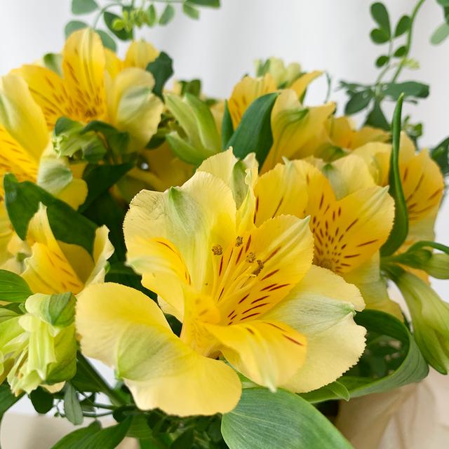 春・アルストロメリア 切り花でも長持ち!茎も力強くて育てやすく、お花もたくさん咲きます