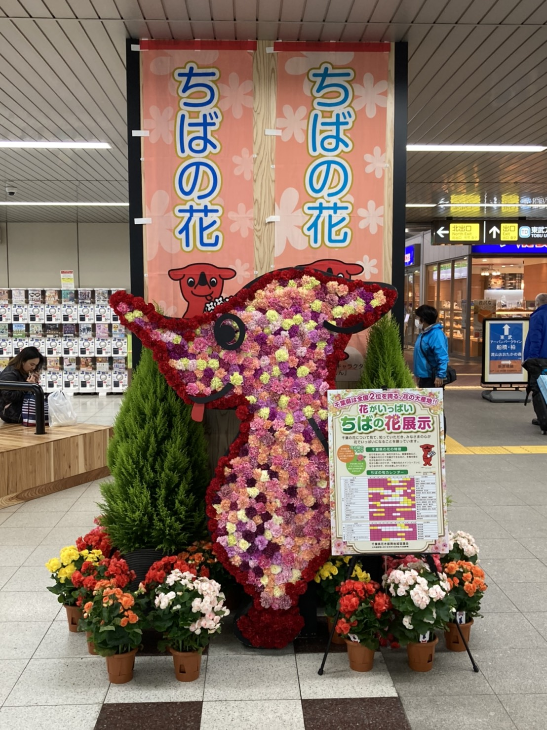 千葉県産のお花を応援!北総鉄道  新鎌ヶ谷駅でチーバくんのお花の展示がスタートしました