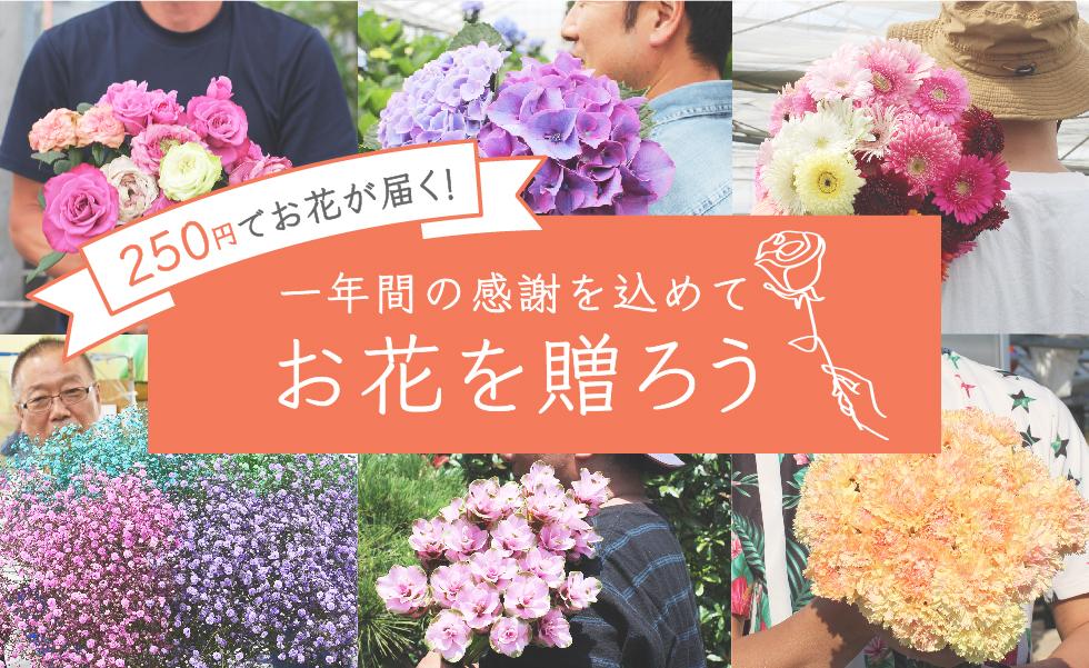 お花のつくり手を応援!250円(税/送料込)でお花をお届けするキャンペーンを開始