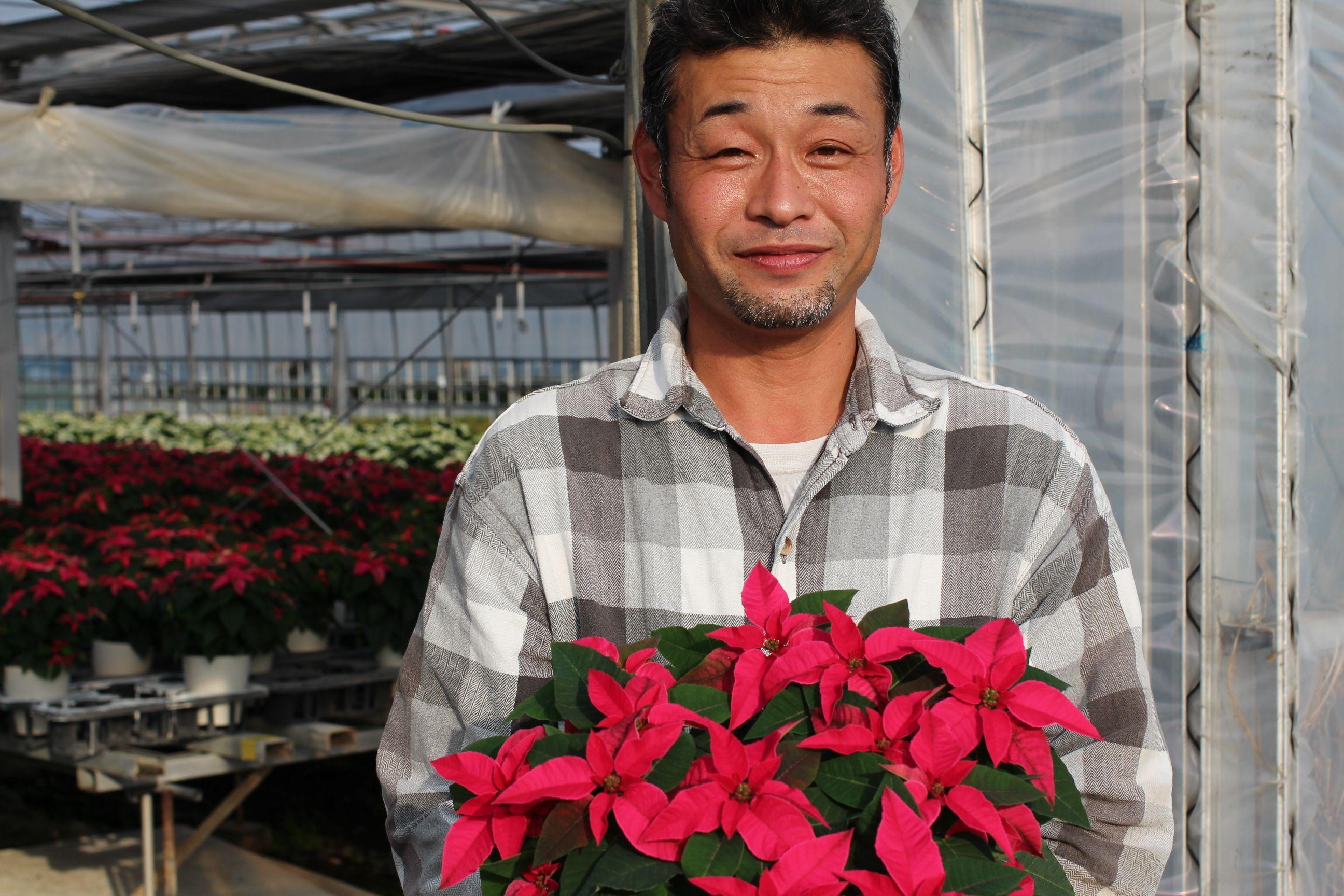 【ポインセチアのつくり手に聞く】マルコウ種苗萩原さん お花の生産者インタビュー ポインセチアの育て方