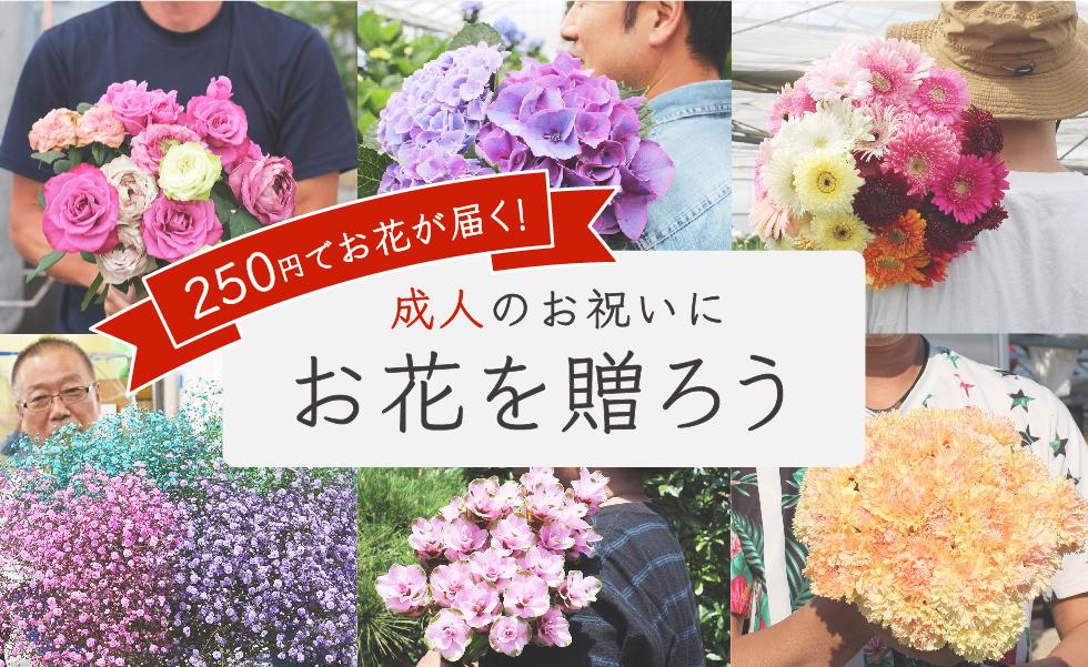 新成人をお祝いしよう!250円でお花を贈れる「新成人お祝いキャンペーン」