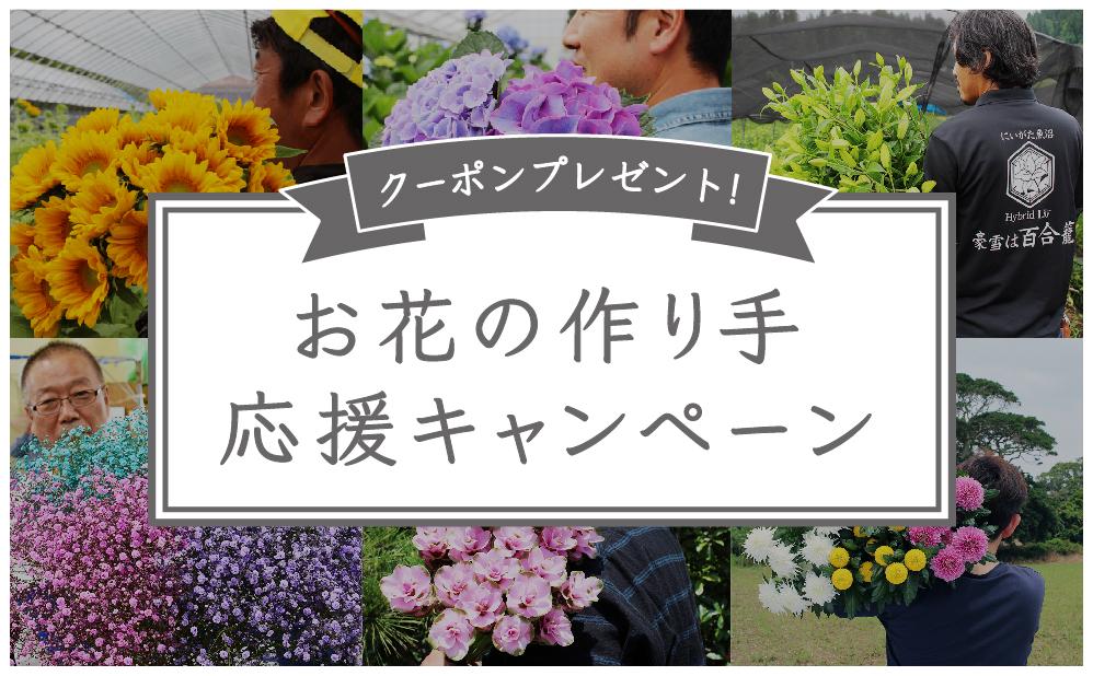 【第10弾達成記念キャンペーン】30%OFFクーポンで花のつくり手を応援! 2020/10末迄