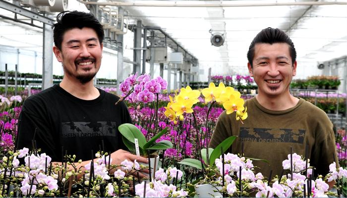 <お花のつくり手 応援>敬老の日の贈り物にぴったりな、椎名洋ラン園のミディ胡蝶蘭をお届けします。