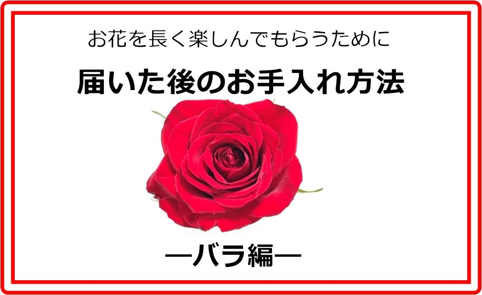 お花の水揚げ・お手入れ方法~バラ編~