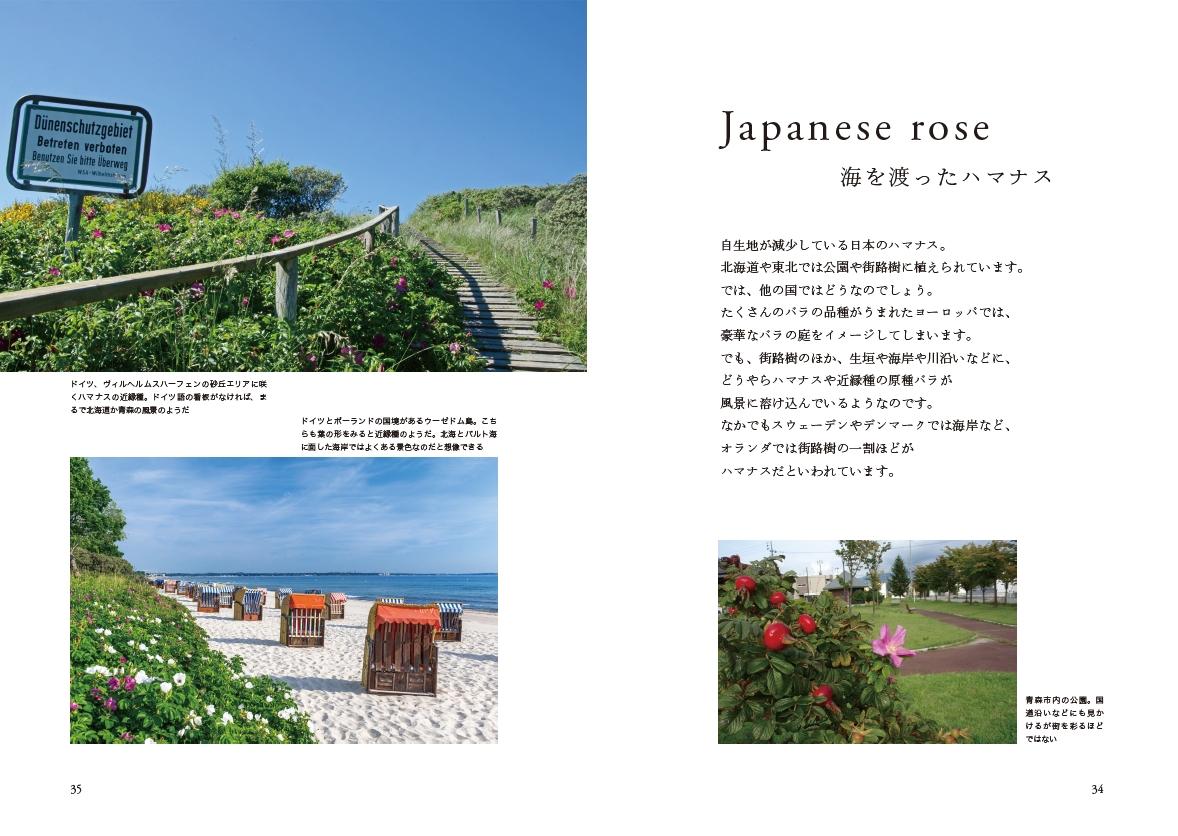 【公開3】「ジャパニーズローズ」小冊子/シーボルトや川原慶賀、ルドゥーテ。植物図譜も掲載してます。