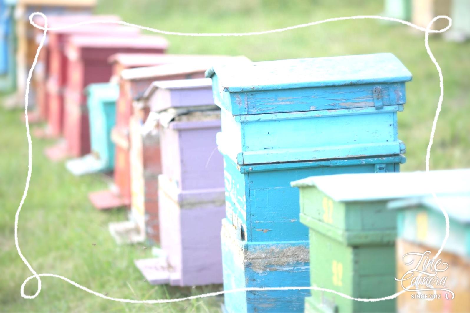 アメリカユタ産のピュアなハチミツが入荷致します!