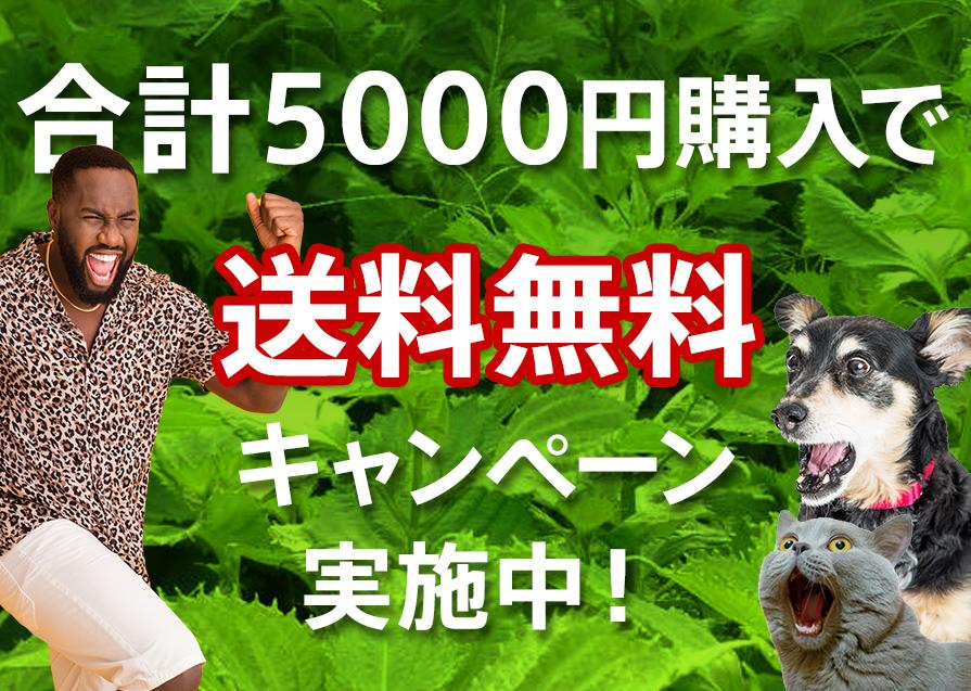 綱島大葉屋でのご購入合計5000円以上で送料無料キャンペーン実施中!