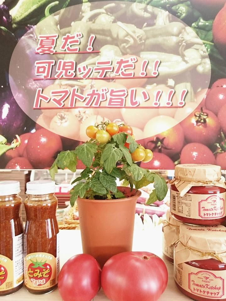 鉢植えトマトの販売開始!