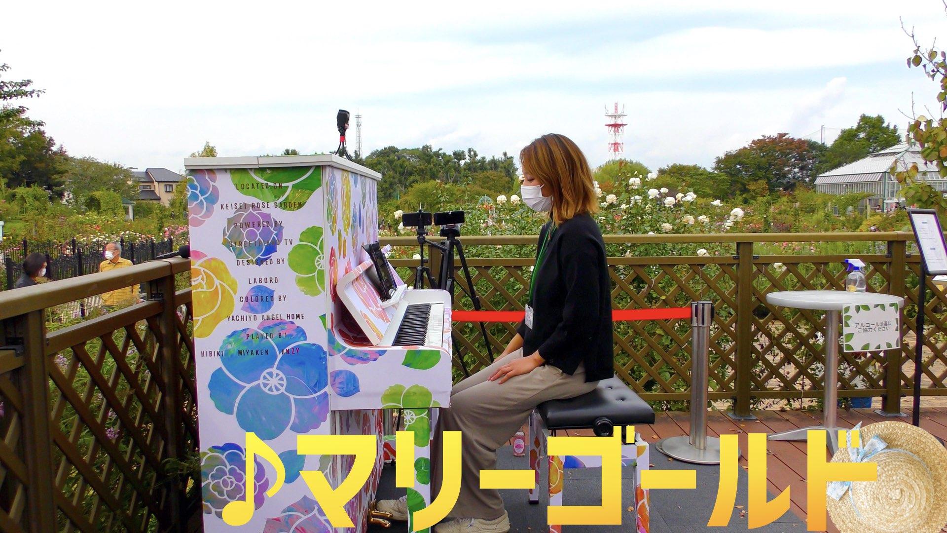 【ストリートピアノ】あいみょん「マリーゴールド」/ ゆっちゃん@京成バラ園