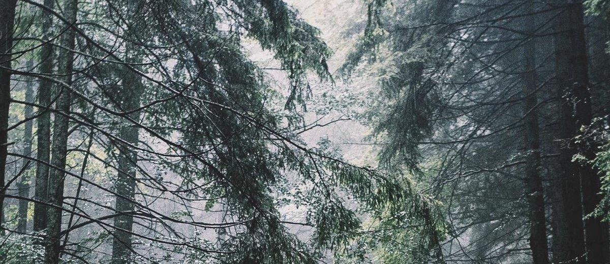 「1万本の木のイニシアチブ(10,000 trees initiative)」