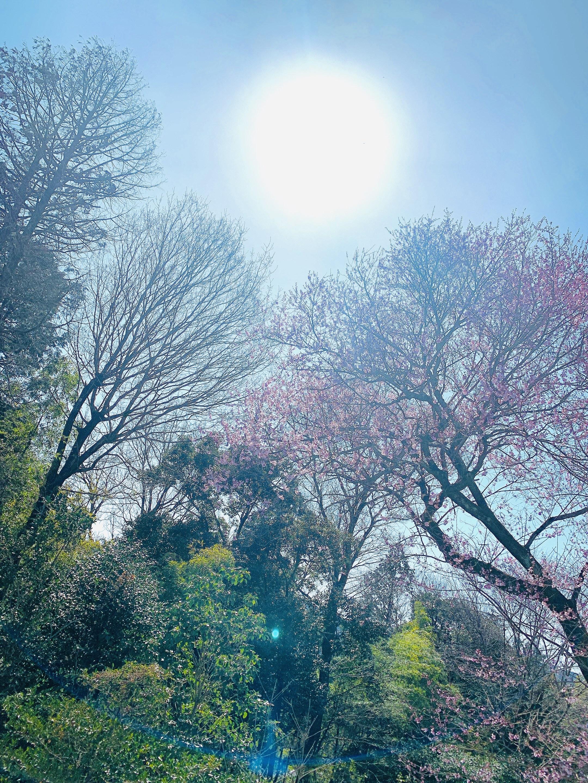 桜が咲きました✨春ですね〜!