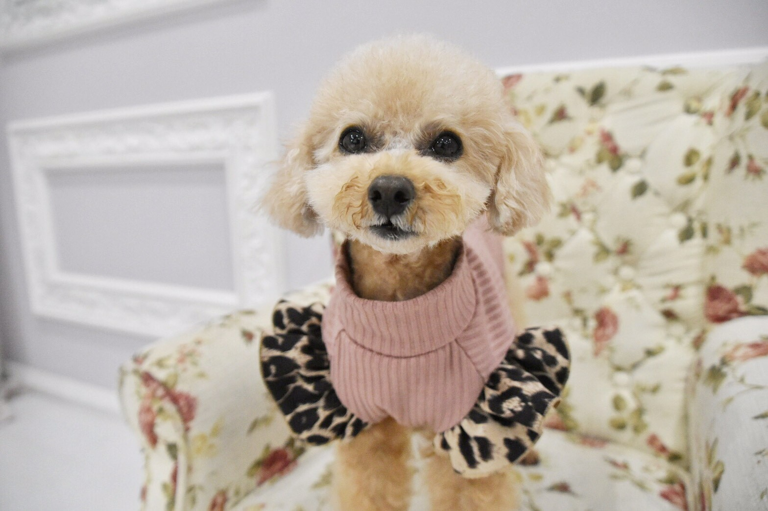 モデル犬について