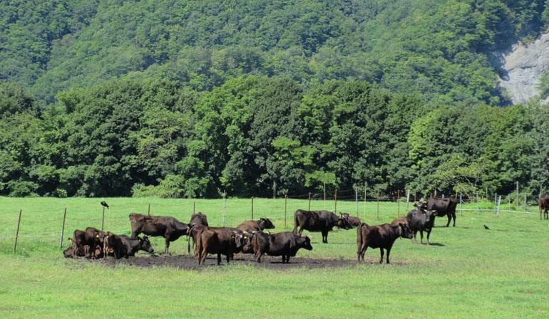 びらとり和牛について
