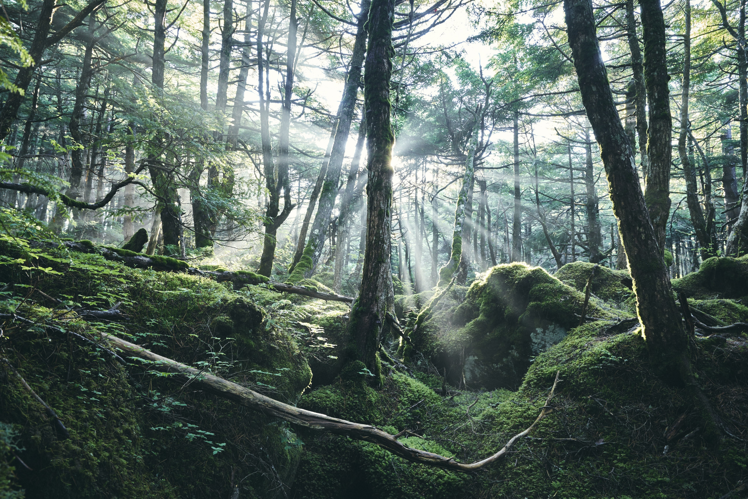 InPhocus 北八ヶ岳写真教室ビギナーコース開催のお知らせ
