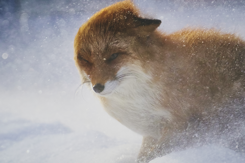 InPhocus Stories  Wildlife / 柏倉陽介