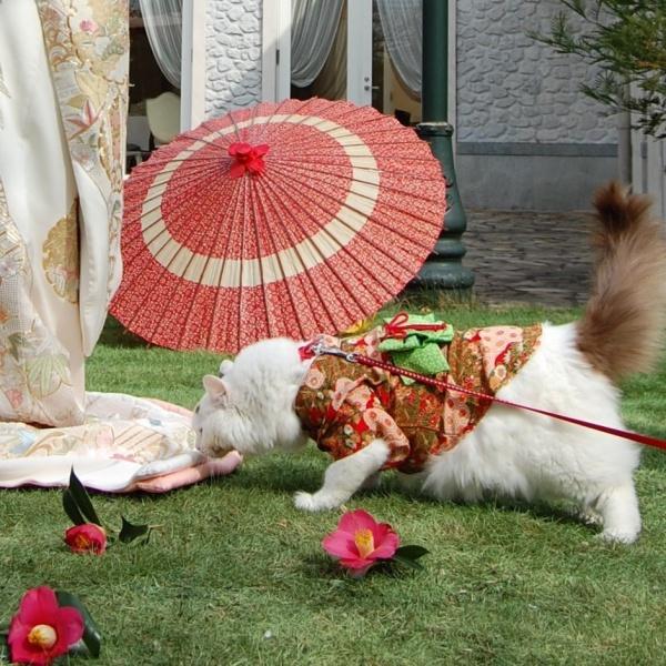 和装で撮影のお手伝い|幕張のお花屋さんブーケアンドブーケ海浜幕張店の撮影情報
