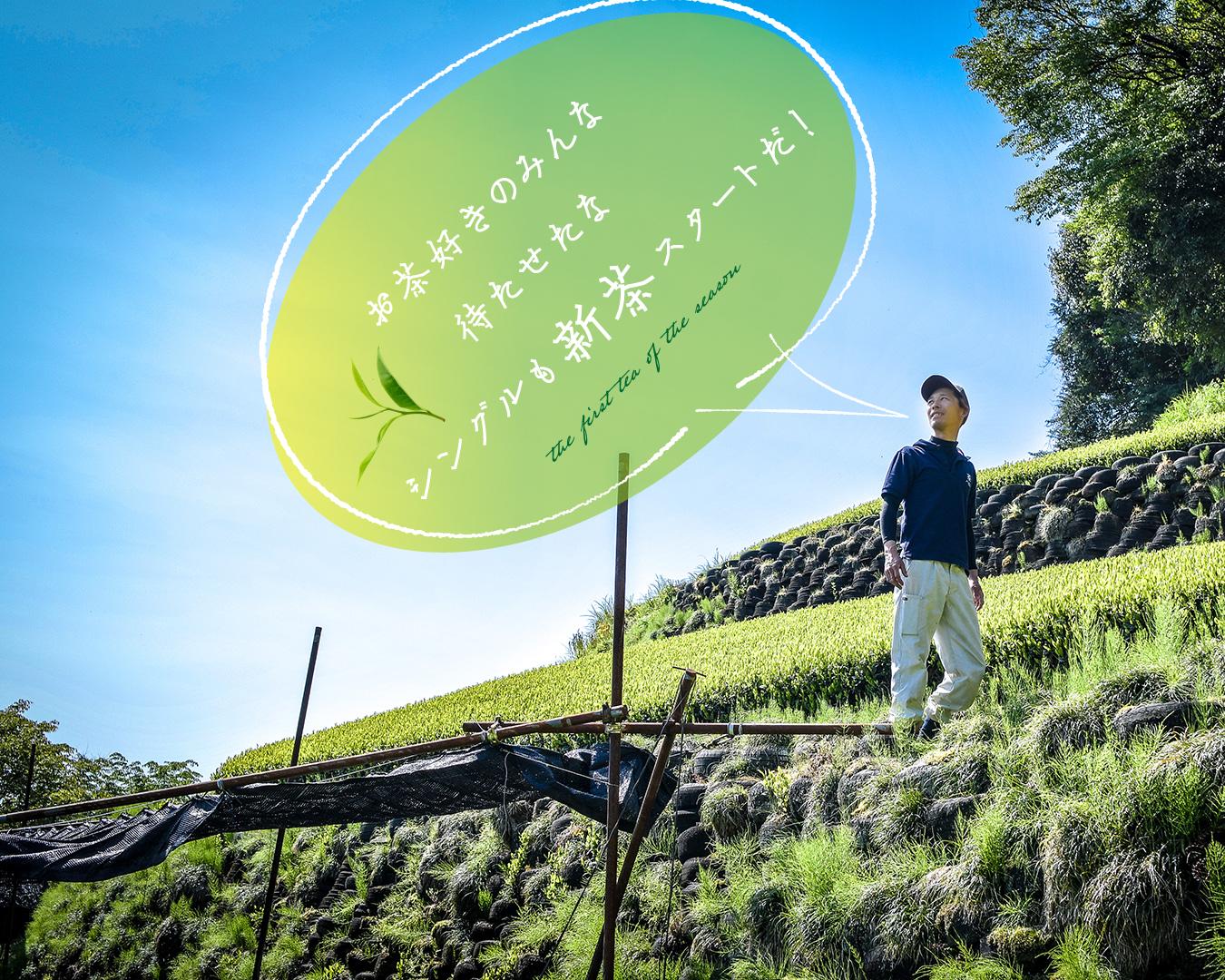 ★2021新茶★豊好園シングル煎茶スタート!