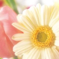 お花の写真が増えました。