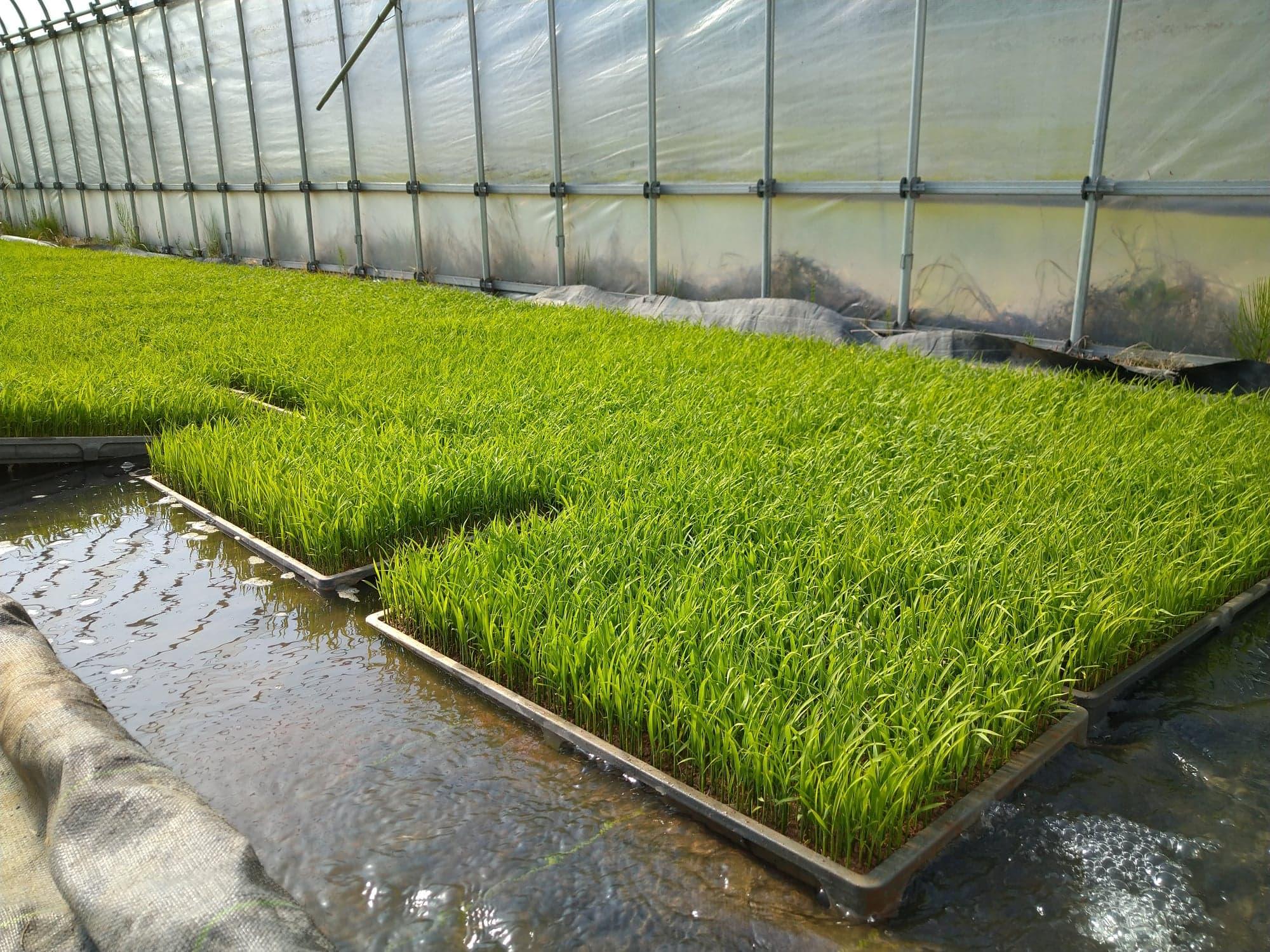 2021年のお米作り始まりました