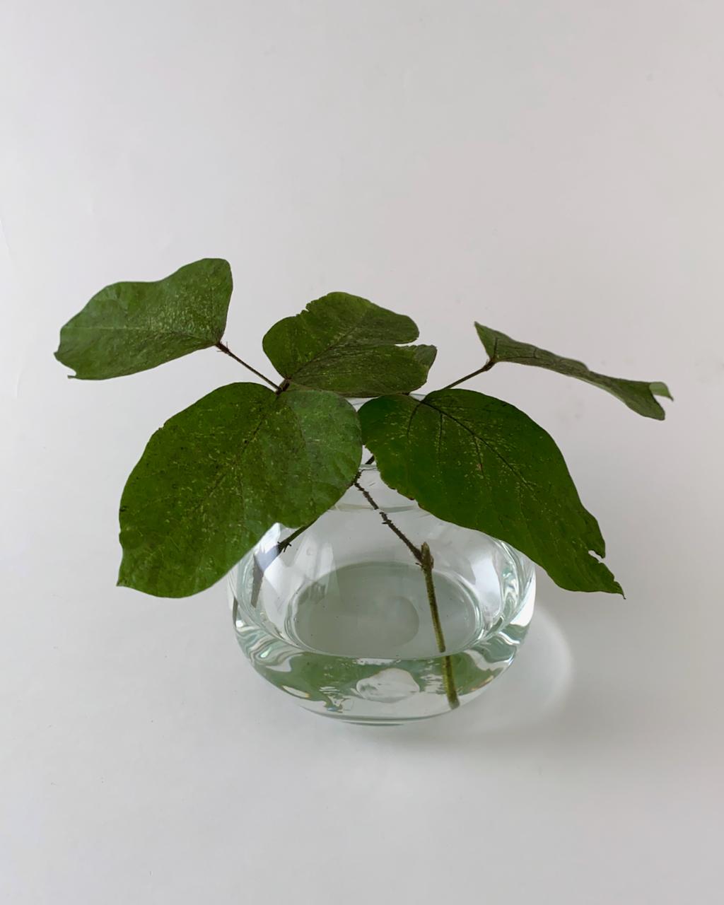 Basic Vase Oval Clear|フラワーベース