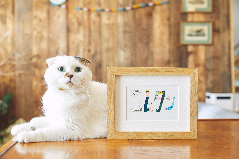 「コムタン」は猫界のアイドル