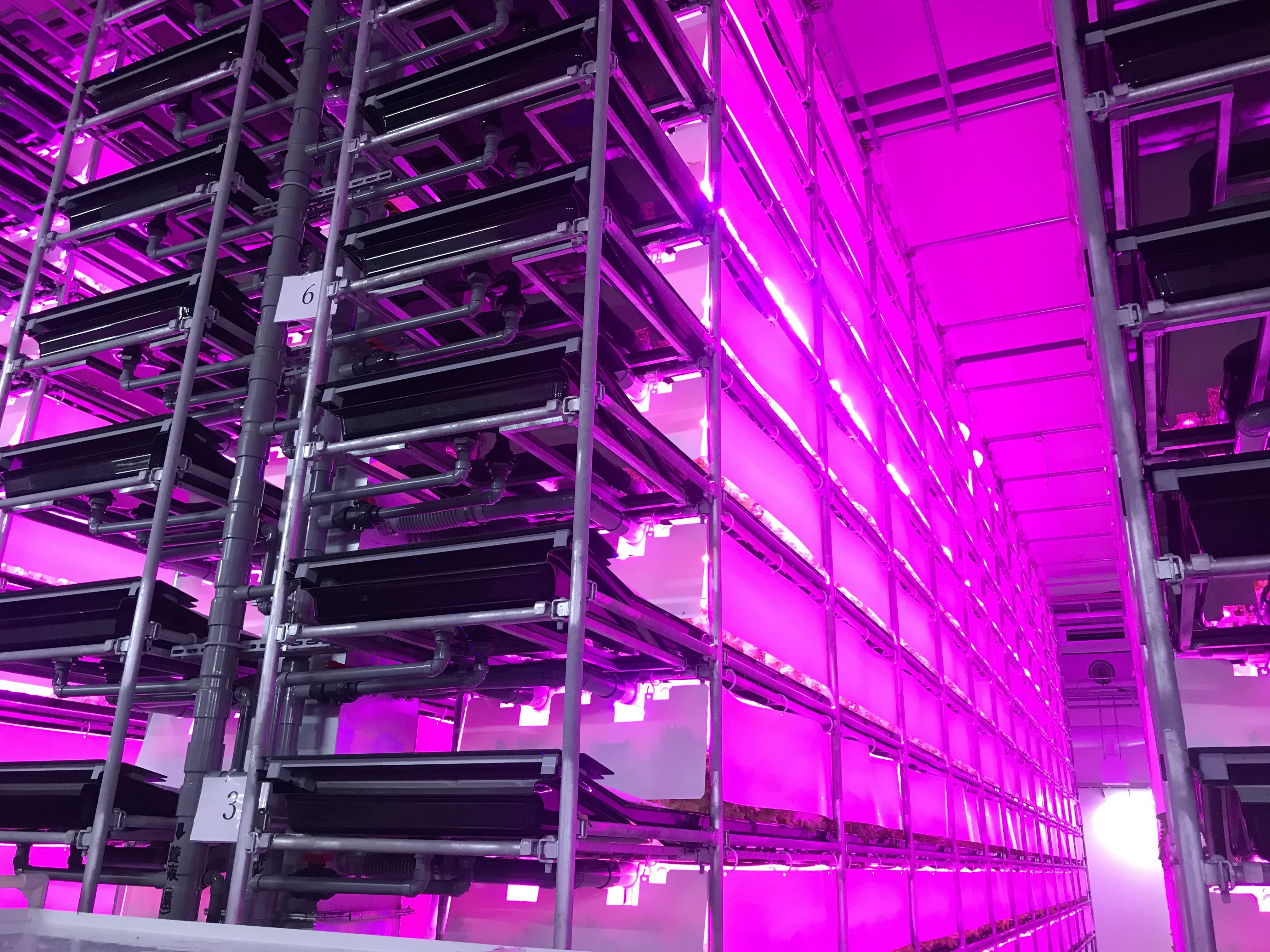 人工光型植物工場 LOHASLA生産中!