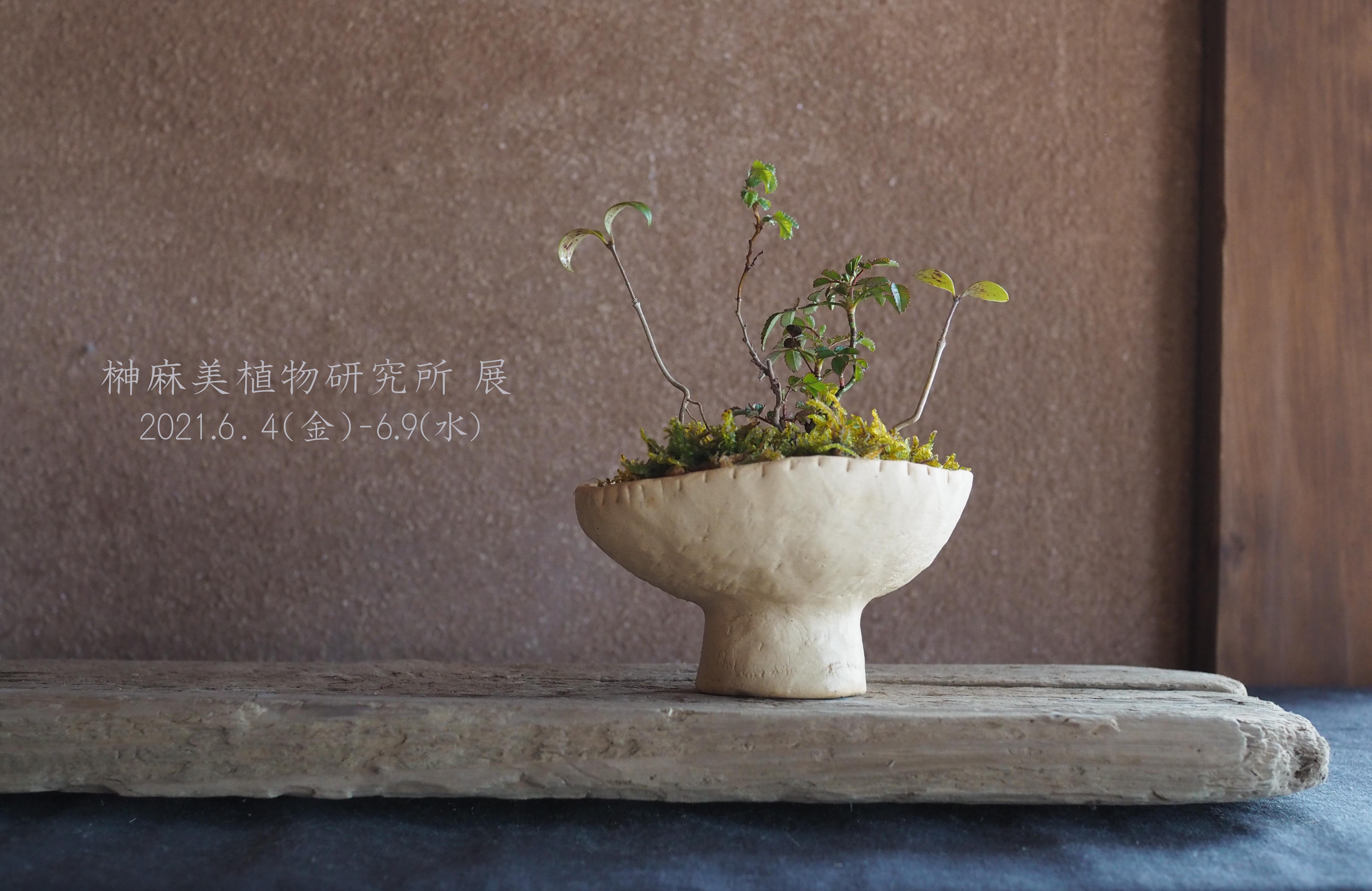 榊麻美植物研究所展