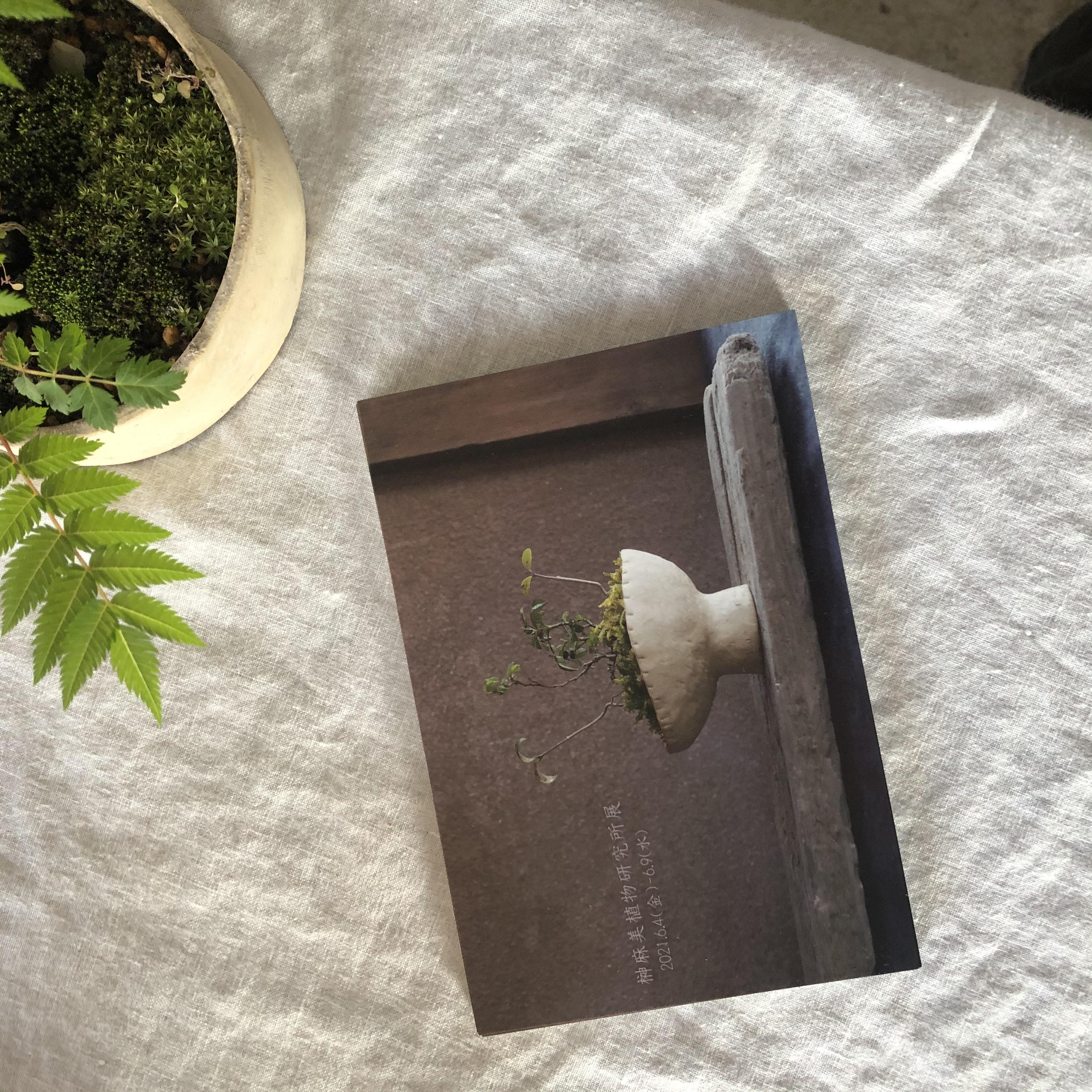 榊麻美植物研究所展 メンテナンスについて