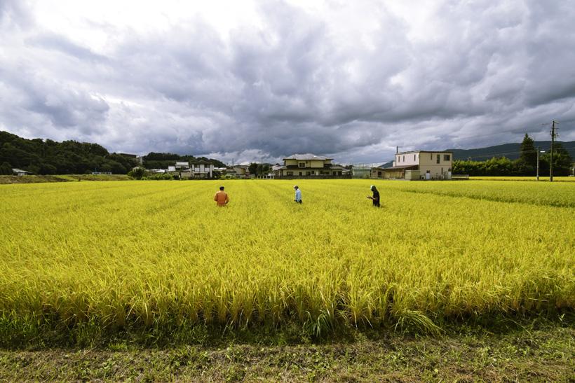 収穫へ向けて栽培講習会を開催