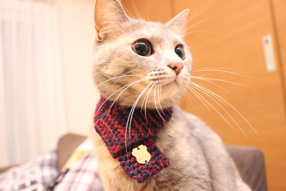 2月22日は「ネコの日」!!冬の終わりをネコマフラーで彩ろう!!