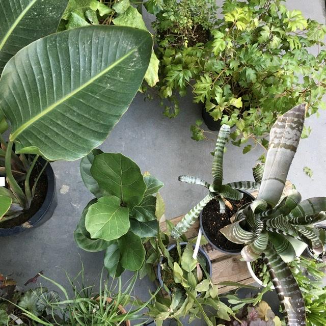 植物に囲まれて