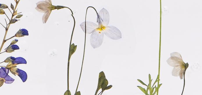 −植物と共に暮らす−